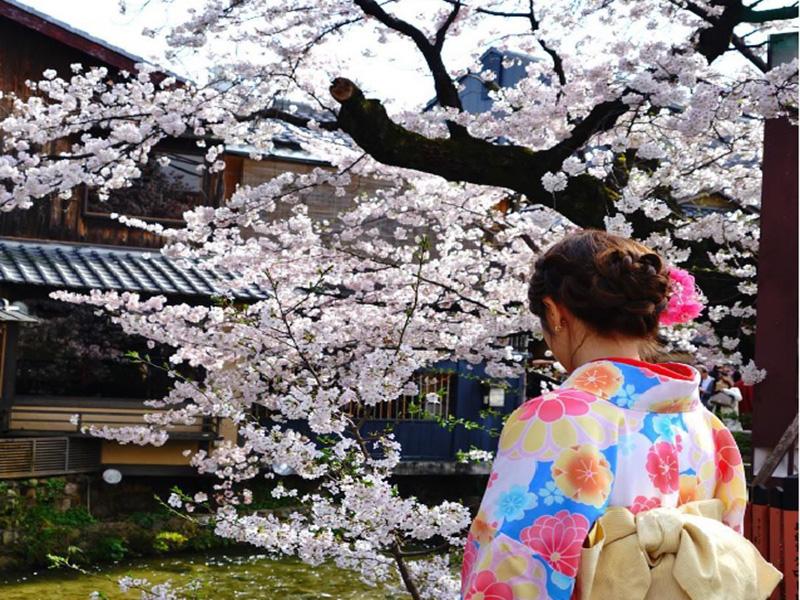 SAKURA KİRAZ ÇİÇEKLERİ ZAMANI JAPONYA TURU